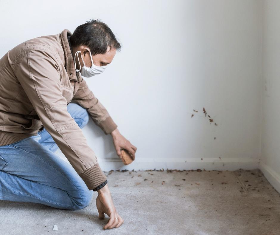 Atlanta Superior Home Inspections MOLD inspection
